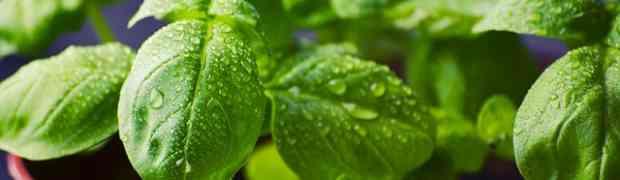 Dieta ziołowa na odchudzanie
